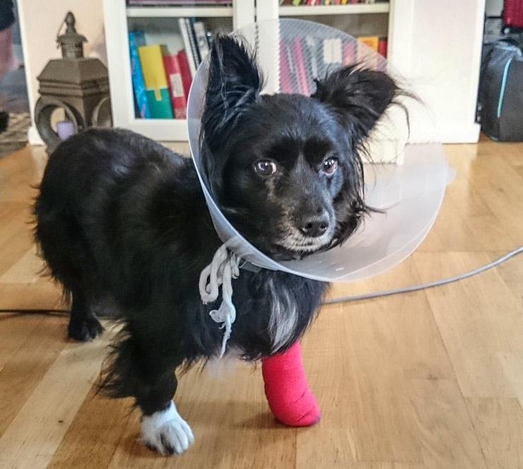 ludde bandage