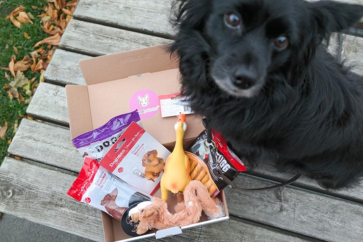 ludde gillar hundpaketet