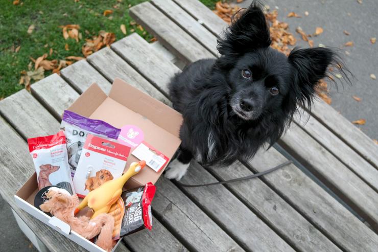innehåll i hundpaketet
