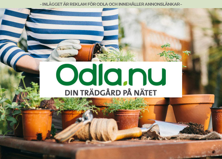 odla superweek