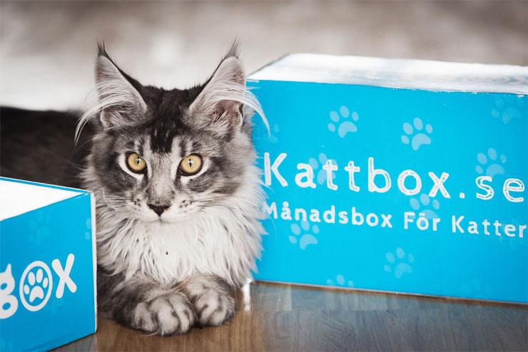 kattbox rabatt