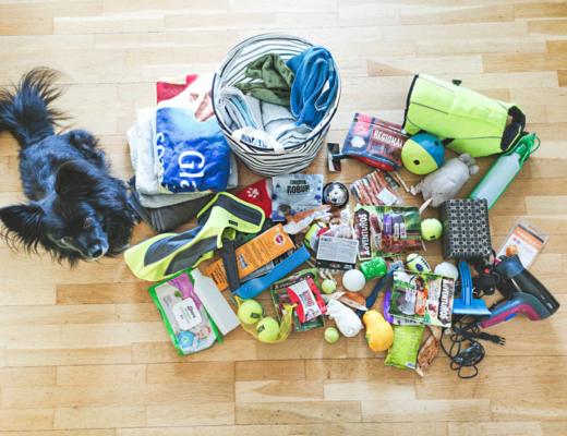 vecka 9 - organisera husdjurens saker