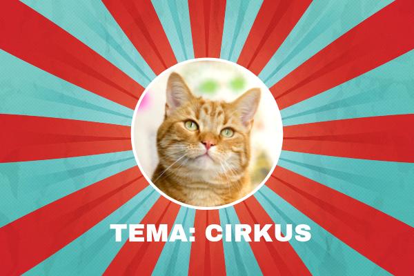 kattbox cirkus