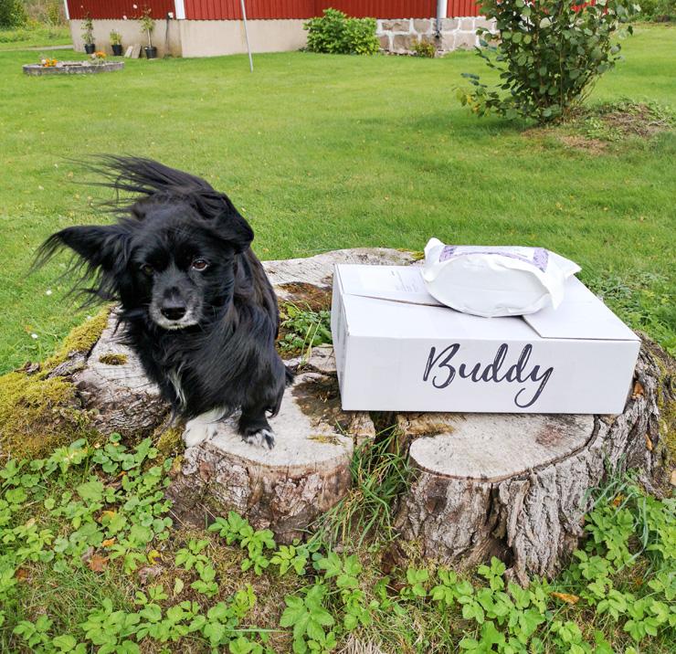 buddy hundfoder