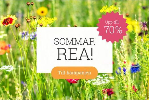 odla sommarrea