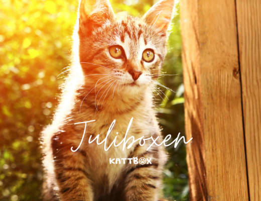kattbox julibox